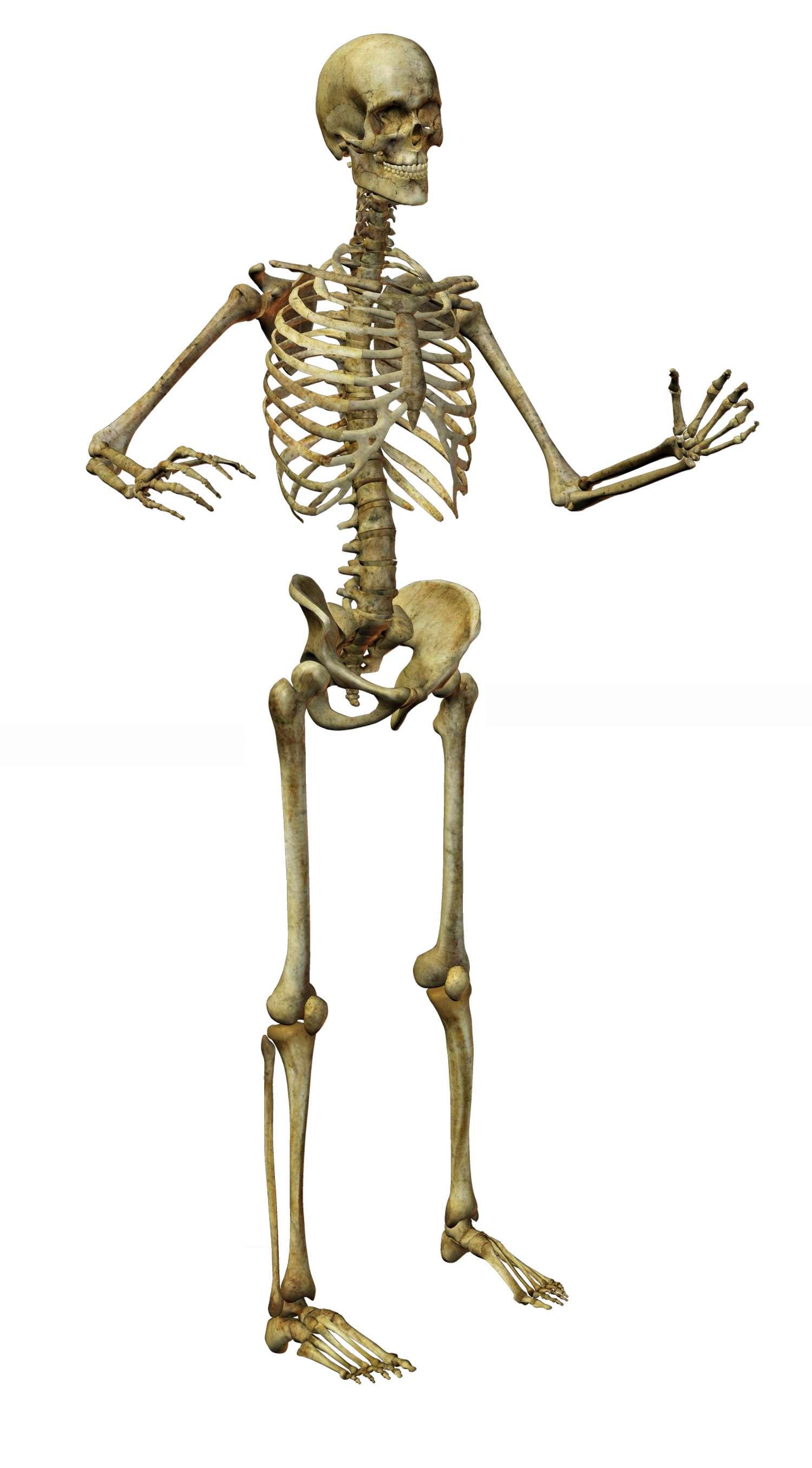2 Imágenes de Esqueletos en Calidad Alta | Imagenes